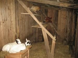 Cabane Pour Poule : cabane photo pour le trombino des abris page 11 ~ Premium-room.com Idées de Décoration