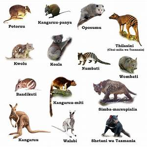 Image Gallery marsupialia