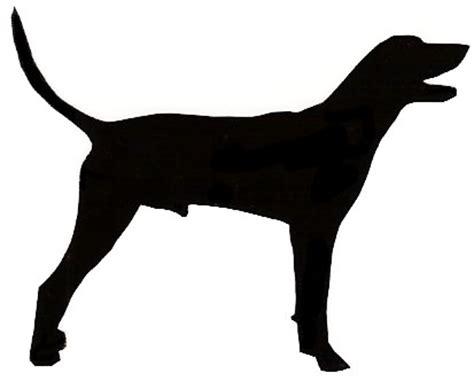 norwich terrier schipperke
