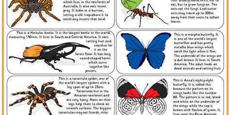 rainforest minibeasts comprehension classroom secrets