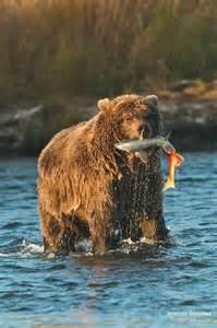 Animals Eating Fish