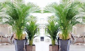 Palmen Für Drinnen : terrasse und garten deals gutscheine groupon ~ Michelbontemps.com Haus und Dekorationen
