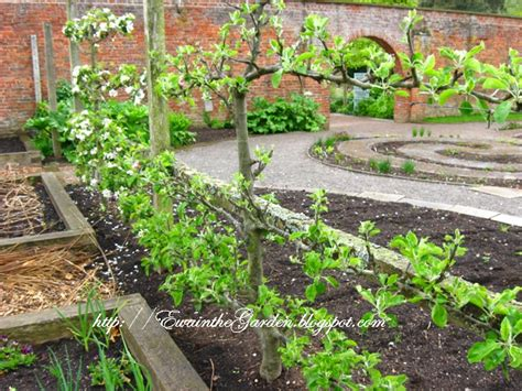 picture of a vegetable garden ewa in the garden 22 pictures of english vegetable garden