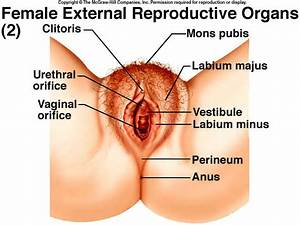 Reproductive System Lab
