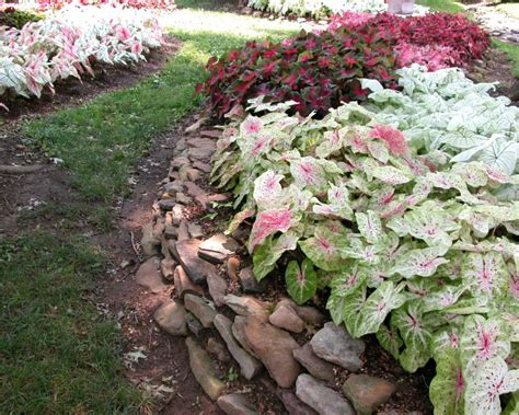 how to arrange a flower bed arranging caladiums in flower beds small but effective ideas