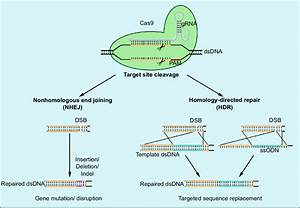 Gene Editing By Crispr  Cas9 For Gene Inactivation And