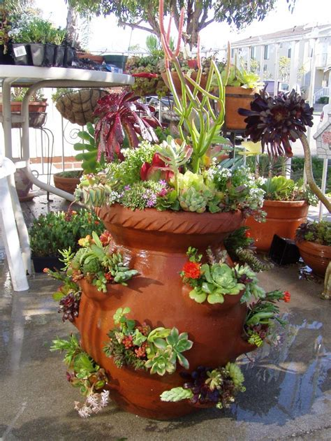 planting succulents in containers strawberry succulent pot 252 cottage farms 4262