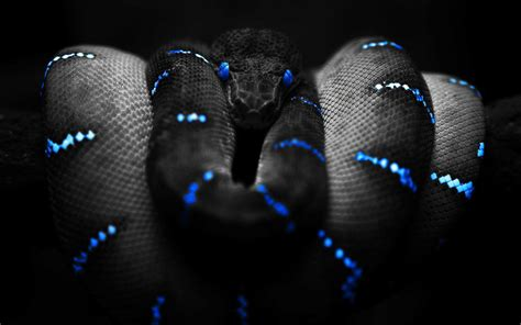 black and blue black and blue neon snake focal wallpapers