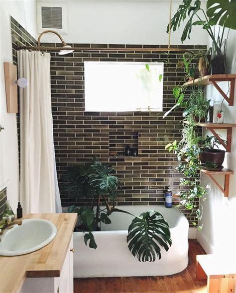 plante cuisine decoration quelle plante peut on mettre dans une salle de bain