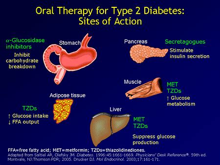 oral therapy  type  diabetes sites  action