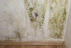 Feuchte Wände Was Tun : schimmel entfernung richtig schnell einfach informiert ~ Michelbontemps.com Haus und Dekorationen