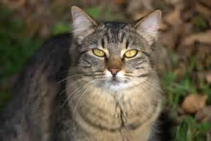 Brown Tabby Cat Outside