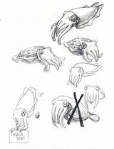 Cuttlefish Drawing Flamboyant Sketch Coloring Sketches Drawings Sea Sketchite Nautilus Dessin Fish Visiter Animaux sketch template