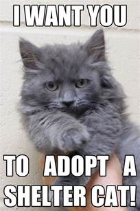 adopt cat upcoming events adopt a shelter cat month half price
