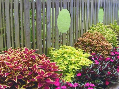 Backyard Ideas For Summer by Late Summer Color For The Garden Hgtv