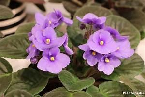 Blühende Zimmerpflanzen Pflegeleicht : zimmerpflanzen die wenig licht brauchen gr ne und bl hende ~ Michelbontemps.com Haus und Dekorationen