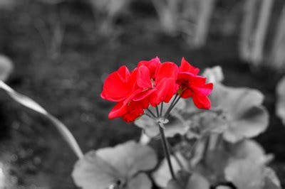 what is a spot color spot color photography