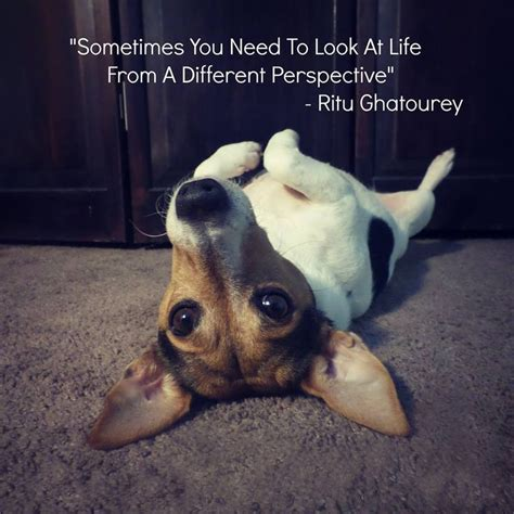 jack russell perspective jack russell memes pinterest