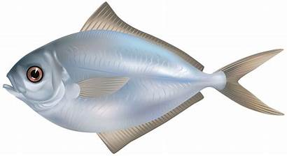 Fish Clipart Butter Grey Transparent Underwater Pngimg
