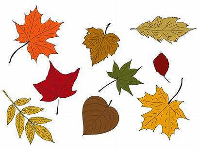 Leaves Fall Printables Colored Printablee