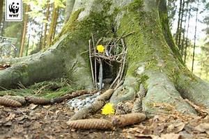 Hütte Im Wald Bauen : im wald unterwegs h tten und barfusspfade bauen little vikings ~ A.2002-acura-tl-radio.info Haus und Dekorationen