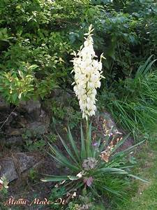 Yucca Palme Winterhart : mami made it my yucca palm tree is splendid meine yucca ~ A.2002-acura-tl-radio.info Haus und Dekorationen