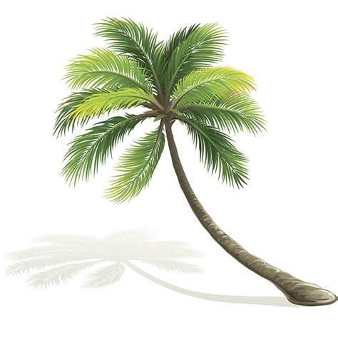 jeux de cuisine fr le palmier pour un jardin exotique magazine avantages
