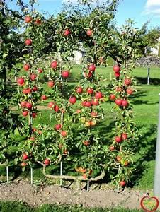Spalierobst Als Sichtschutz : 8 besten spalierobst bilder auf pinterest gartenideen birnen und garten pflanzen ~ Orissabook.com Haus und Dekorationen