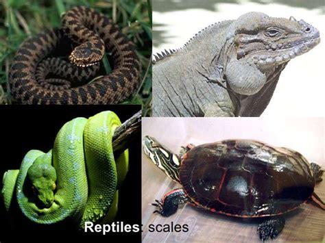 vertebrate invertebrate animals