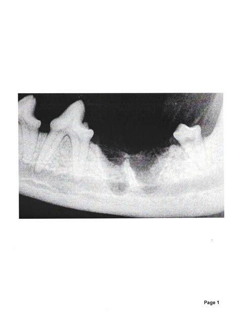 oral health accessibility dental veterinary