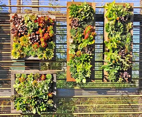 Vertical Garden Succulent Wall Panels by Cactus Jungle Succulent Wall Panels Backyard Fence
