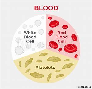 U0026quot Composition Of Blood Diagram   Red And White Blood Cell   Vector U0026quot  Stock Image And Royalty