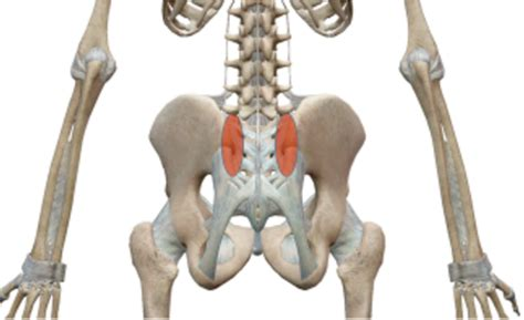 med si鑒e sacroiliac joint relief in2it