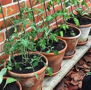 Que Planter En Juin : ton petit potager que pouvons nous planter en juin tpl ~ Melissatoandfro.com Idées de Décoration