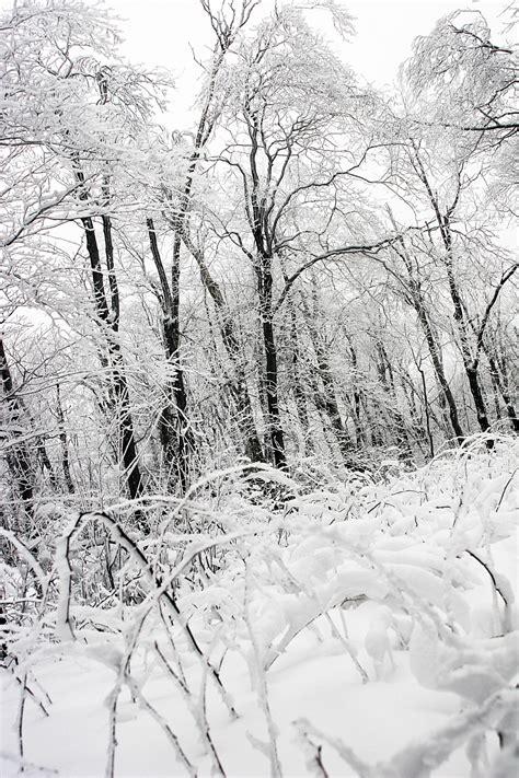 Free Images Landscape Tree Forest Branch Snow Black
