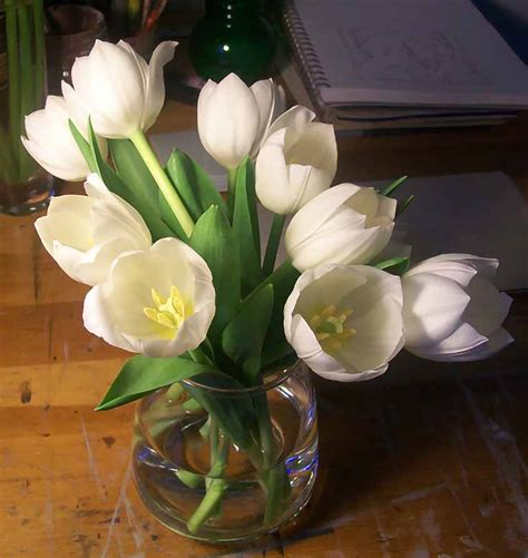 paint white tulips  oil emptyeaselcom