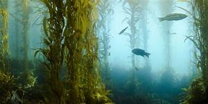 The Difference Between Seaweed And Kelp