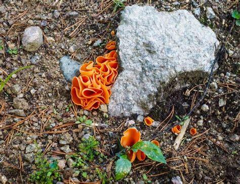Orange Pilze Im Garten by Im Garten Und Am Wegesrand Orange Farbtupfer Am Wegesrand