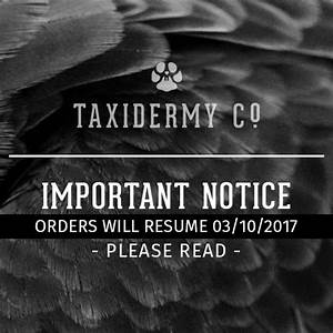 Orders will resume 03/10/2017