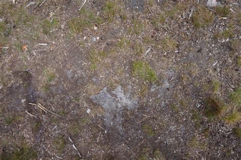 forest soil  ground texturify  textures