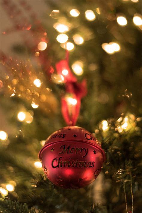 red christmas bell  christmas tree photo