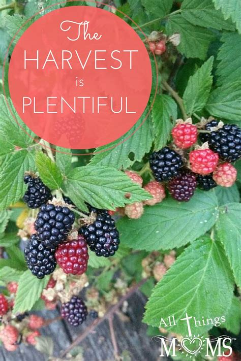 The Harvest is Plentiful - All Things Moms