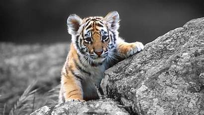 1080p Animals Wallpapers Animal Fresh