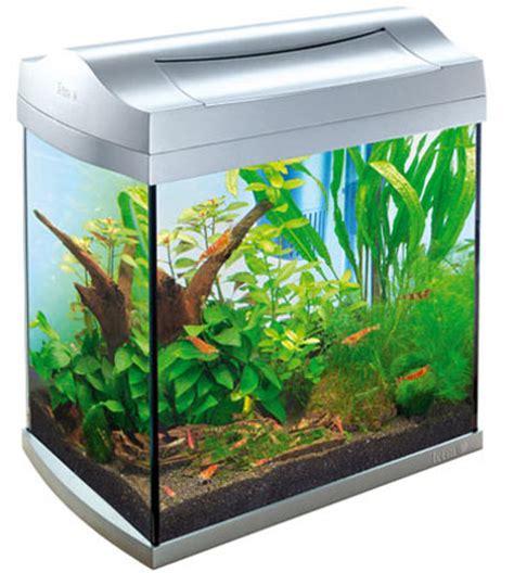 la crevette d aquarium jemesensbien fr
