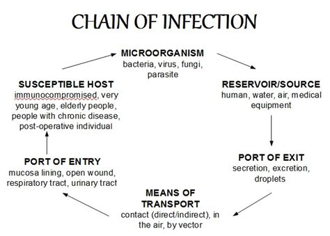 chain of infection more detailed the chain of