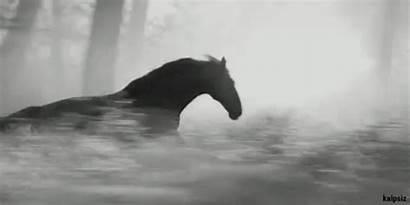 Horses Horse Animated Secretariat Pretty Gifs Stallion