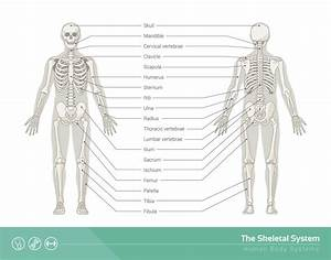 Body Parts List