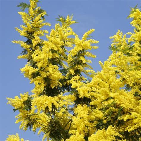 arbre 224 fleurs jaunes liste ooreka