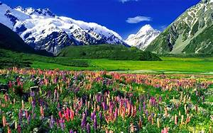 Mountain Landscape Mountain Lupine Flowers, Meadow With ...
