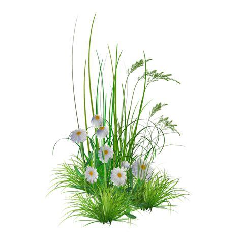 garden flowers png  images  clkercom vector